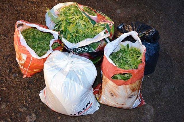 Всего в рамках профилактической операции «Мак» сотрудники межмуниципального отдела МВД России «Усть-Илимский» изъяли более 3 кг наркотиков растительного происхождения.