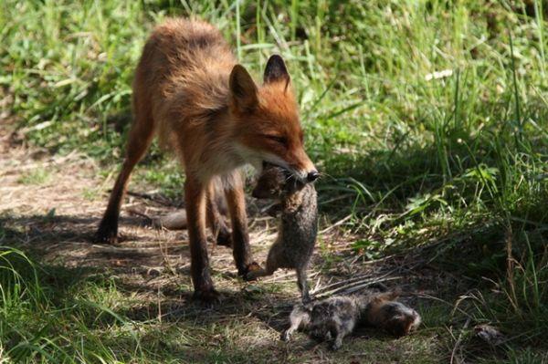 Они уже научились охотиться.