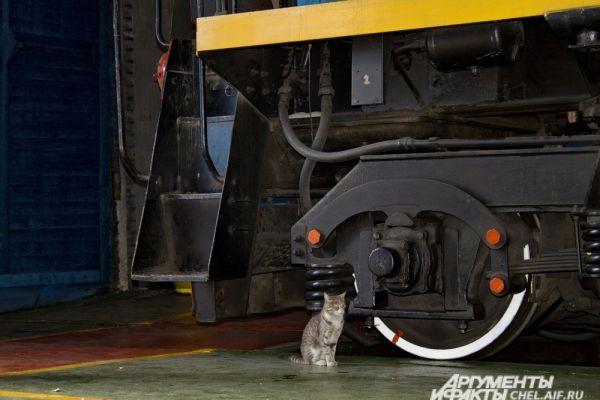 Кошка Муся в цехе жд транспорта. Она притягивает внимание гостей не меньше, чем тепловоз.