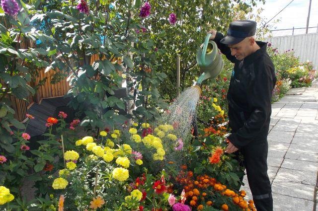 Колонию на севере области превратили в цветочный оазис