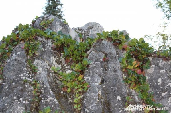 Трималиты - уникальные камни, которые растут прямо из-под земли.