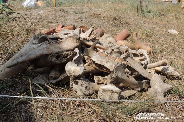 Кости сельскохозяйственных животных.