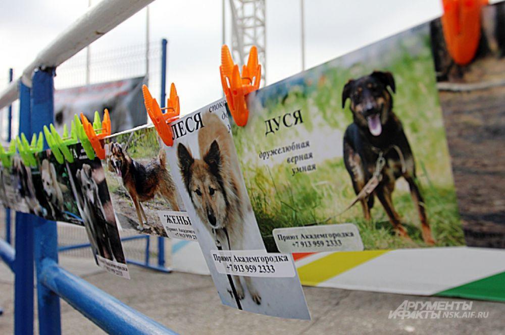 Помочь приюту можно было, купив несколько фотографий собак. А помощь «Праву животных на жизнь» действительно, не помешает. Помочь десяткам собак и людям, которые о них заботятся, можно, перечислив деньги на «голодный телефон» БиЛайн 8-903-938-53-20.