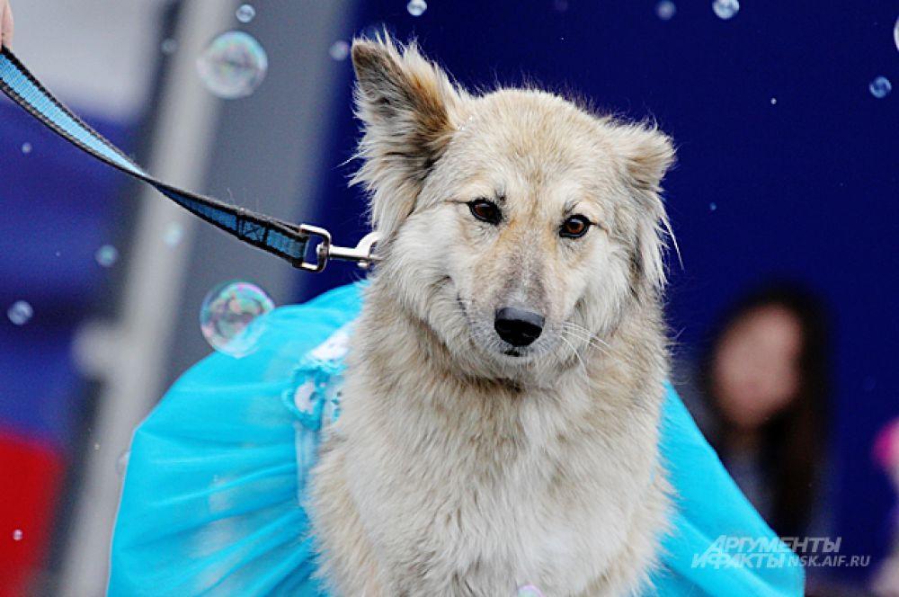 Леся - была на карнавале балериной.