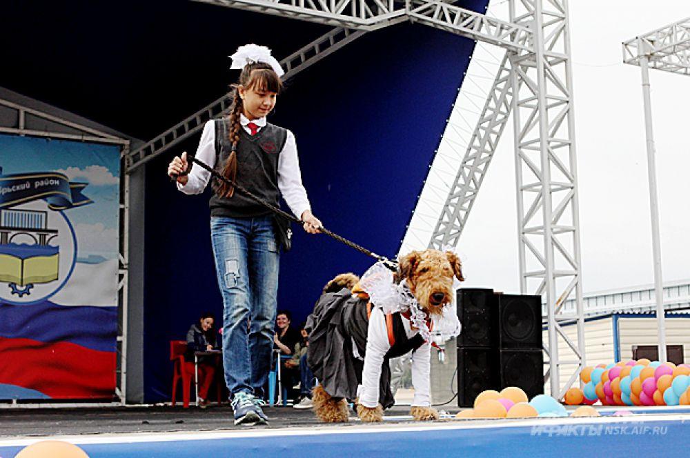 Банты и косички - и у пса и у хозяйки.
