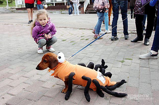 ... карнавал | ОБЩЕСТВО | АиФ Новосибирск: www.nsk.aif.ru/society/1332916