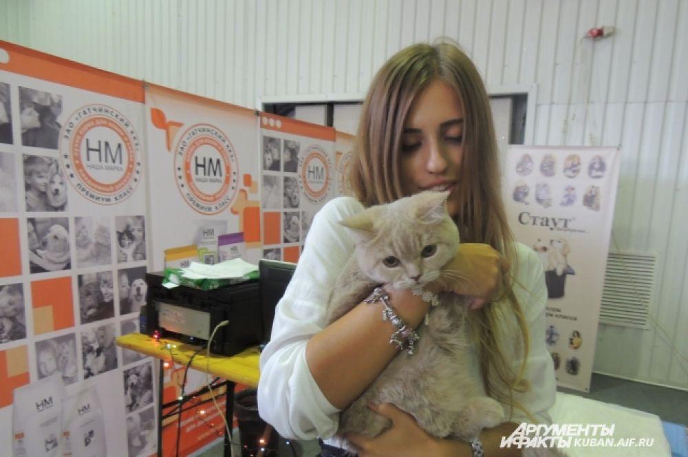 Девушка купила британскую полуторагодовалую кошечку за 5 тысяч рублей.