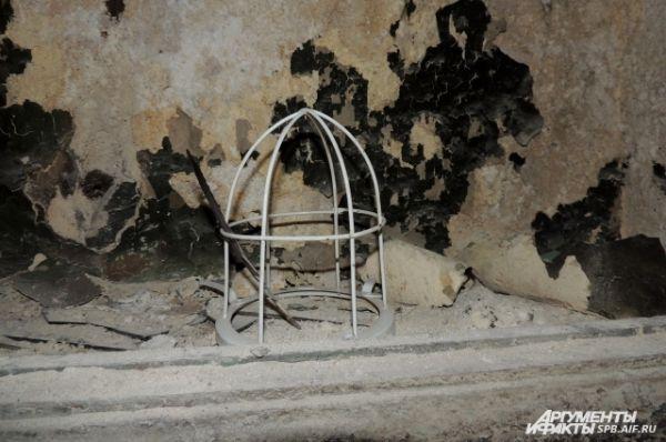 Кажется, что птица только что вылетела из этой клетки.