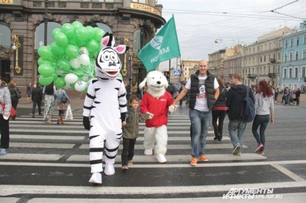 Лидер СПБ.АВТО Святослав Данилов переводит на зеленый сигнал светофора ребенка вместе с Зеброй и собачкой АиФкой.