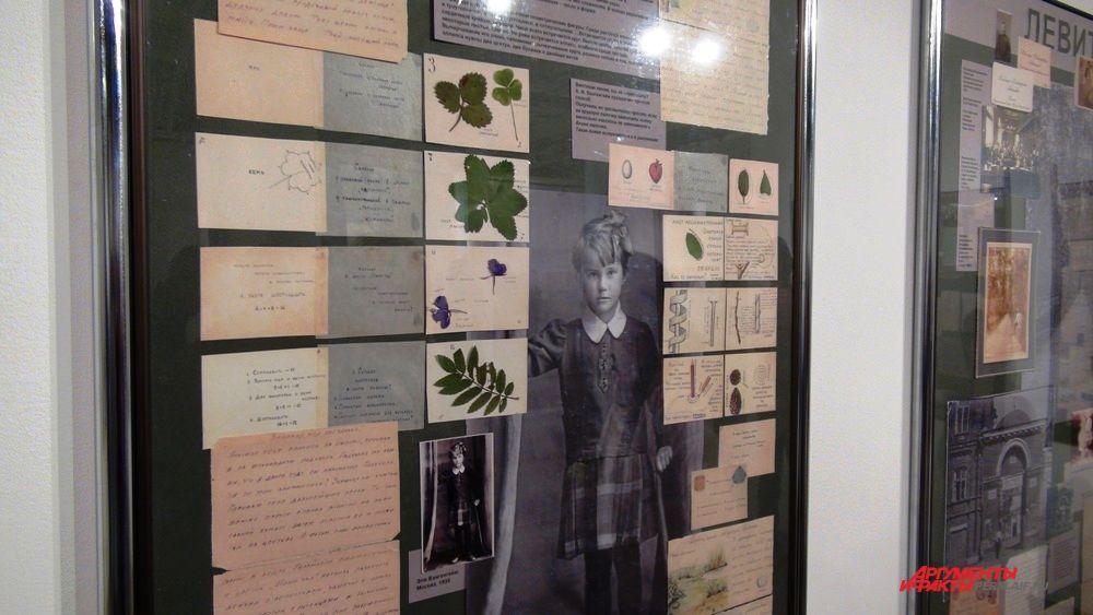 Алексей Вангенгейм в письмах готовил дочку к школе и собирал с ней гербарий.