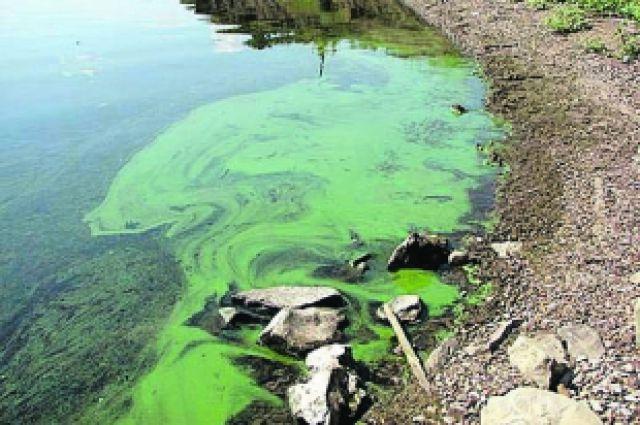 Челябинским водоемам угрожают сине-зеленые водоросли