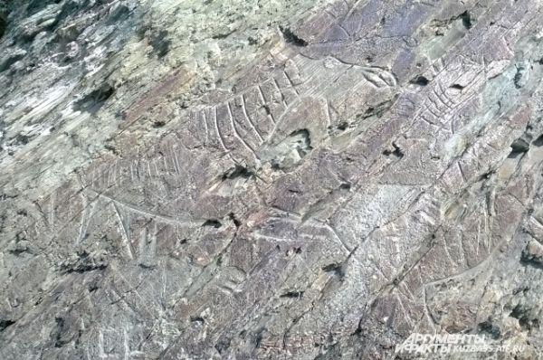 Обилие изображений лосей легко объяснимо. Музей-заповедник пересекает древняя лосиная тропа. По ней до сих пор регулярно проходят лоси к переправе через реку Томь.
