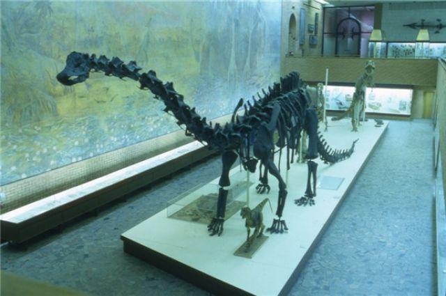 Уральские туристы нашли в реке на Ямале голову динозавра