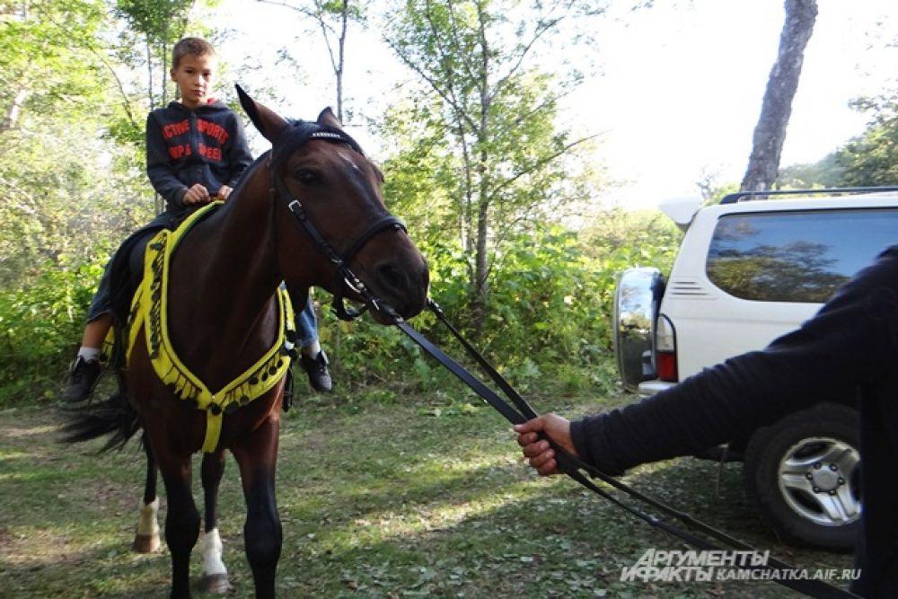 Эти славные лошадки!