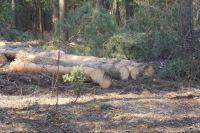 Деревья валятся, а элитные коттеджи вокруг деревни Журавли растут.