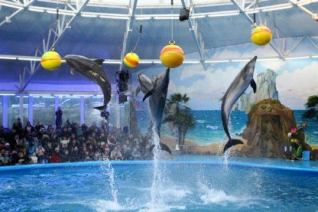 Плавание с дельфинами в Московском дельфинарии | плавание ...