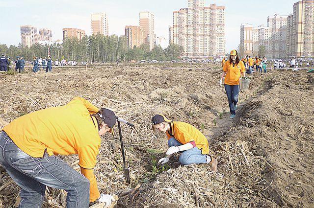 Команда в оранжевых футболках высаживала сосенки.