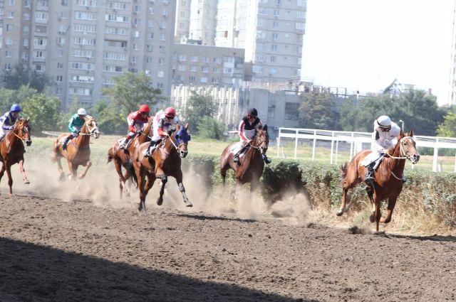 Скачки в Ростове-на-Дону