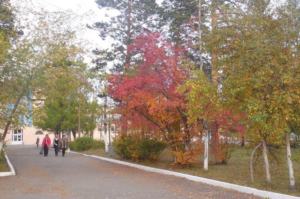 Яркие краски осени: жёлтые, зелёные, бордовые...