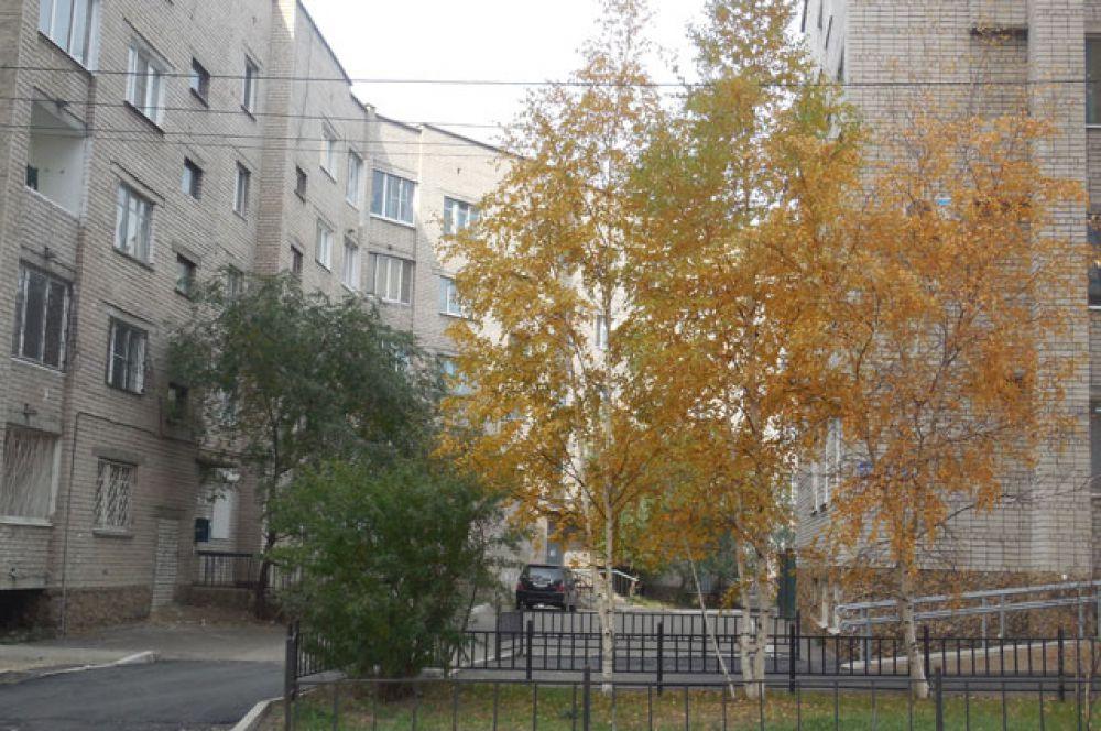 Жёлтая листва берёзки рядом с зеленью кустарники.