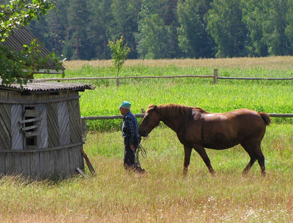 Коня можно использовать как газонокосилку