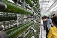 Промышленное производство водорослей - завтрашний день сибирского ноу-хау.