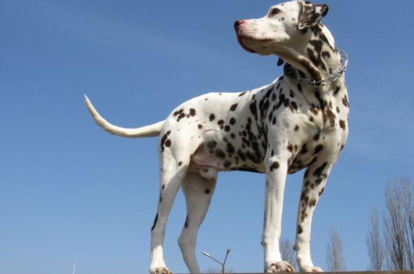 Пёс Боня. Автор фото Евгения Чернышова