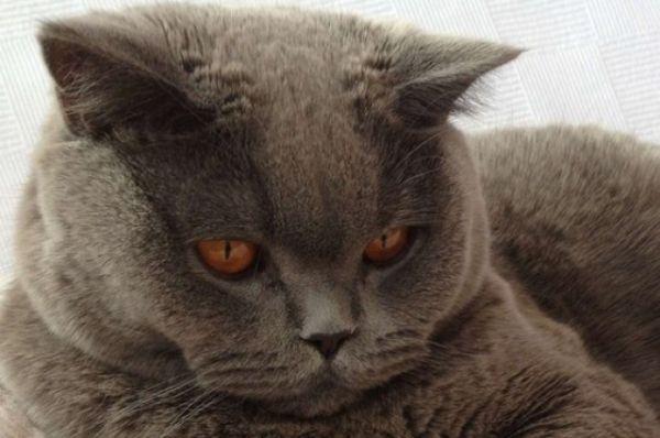 Кот Мартин. Автор фото Виктория Фирсанова