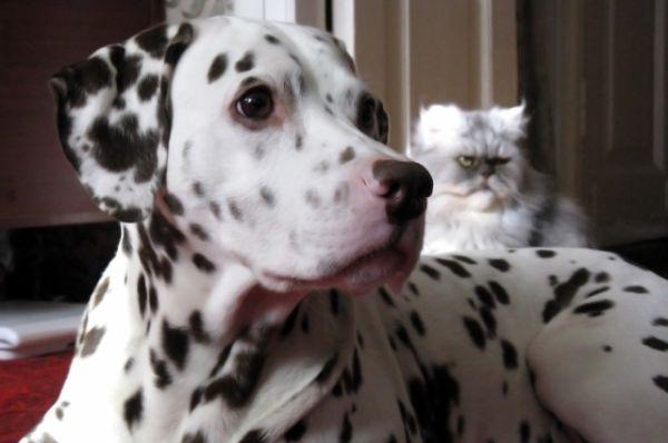 Пёс Боня и кот Никита. Автор фото Евгения Чернышова