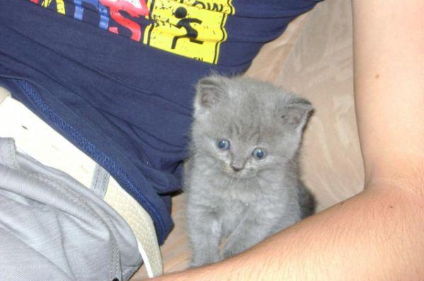 Кот Макс в детстве. Автор фото Сергей Дуднаков