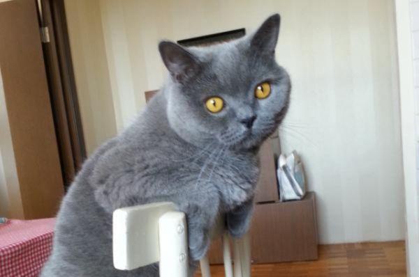 Кот Макс повзрослел. Автор фото Сергей Дуднаков
