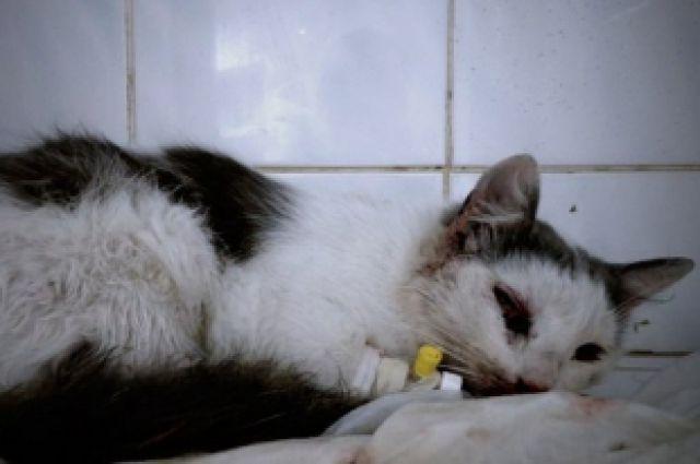 В Челябинске прооперировали кошку с пулей в голове
