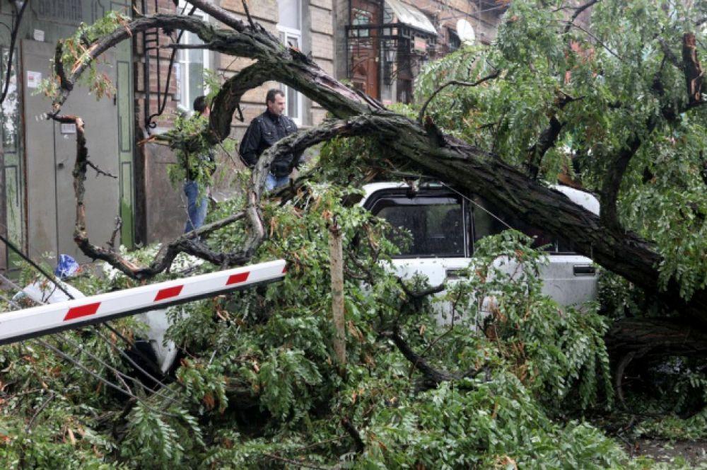 А ведь спасатели предупреджали: не оставляйте автомобили под деревьями.