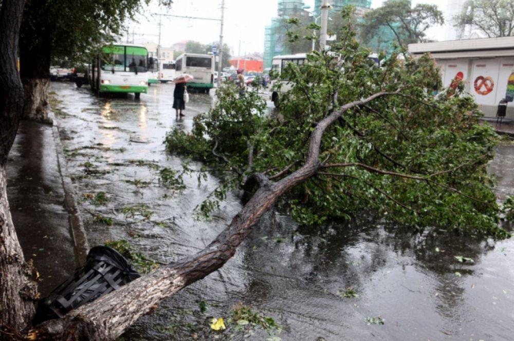 В одном только Ростове на 12.30 упало 120 деревьев.