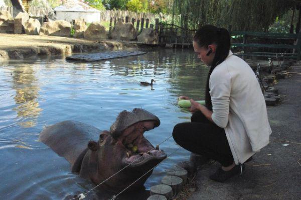 Жужа делит свой водоем с утками, которые обосновались в «Сафари-парке» и не хотят улетать.