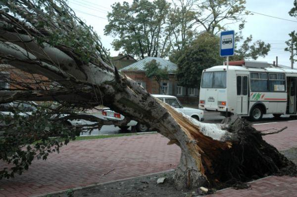 Вот таких гигантов ураганный ветер и вода вырывали с корнем.