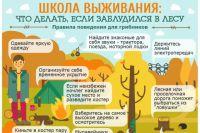 Как выйти из леса и найти дорогу домой