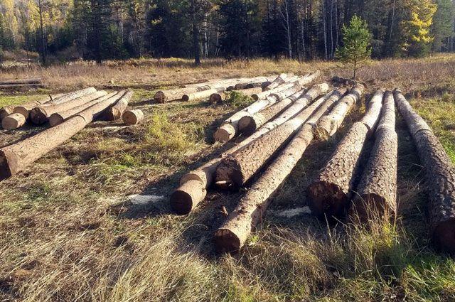 Общий объем добытой преступным путем древесины составил порядка 55 кубометров.