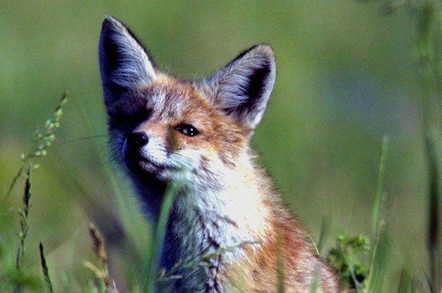 зоозащитники выступять защиту животных, меха которых используют на пошив одежды.