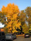 Буйство красок осени