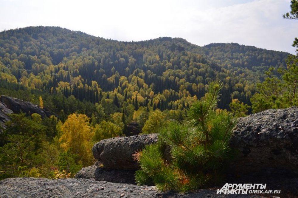 Вид с озера Моховое на Курьинский район.