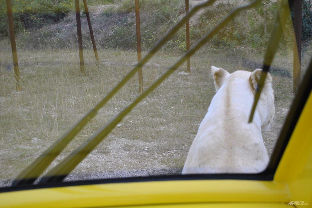 Герда не хочет отпускать Зубкова, поэтому перекрывает дорогу автомобилю.