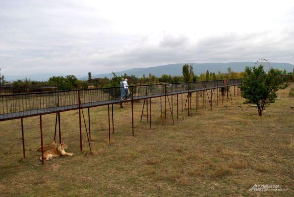 Над «лежбищем» львов построены длинные мостовые переходы, с которых посетители парка круглосуточно могут наблюдать за жизнью хищников. Хищники также иногда с немалым интересом наблюдают за гостями парка.