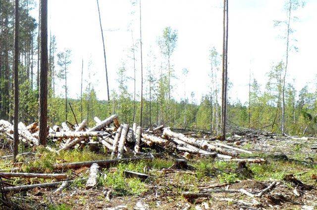 Место незаконной рубки леса в Чунском районе.