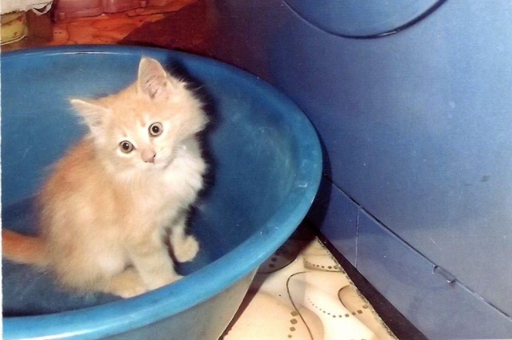 Котёнок. Авто фото Г.Ф. Гудкова