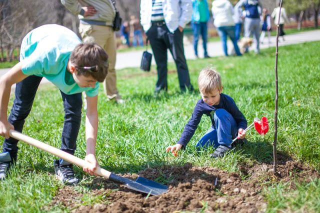 Екатеринбург засадят липами, яблонями и березами