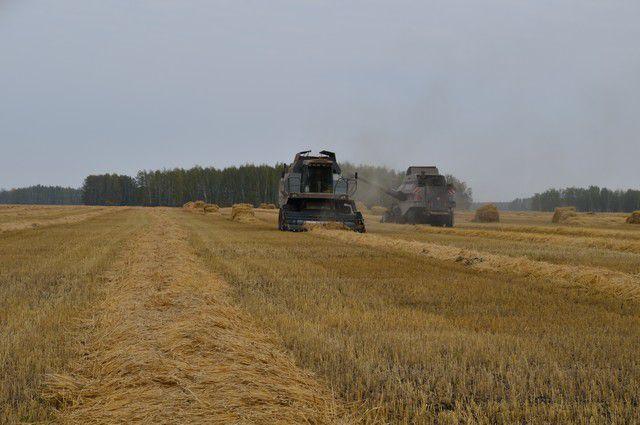 Выращенные за лето хлеба убирают с полей ударными темпами.