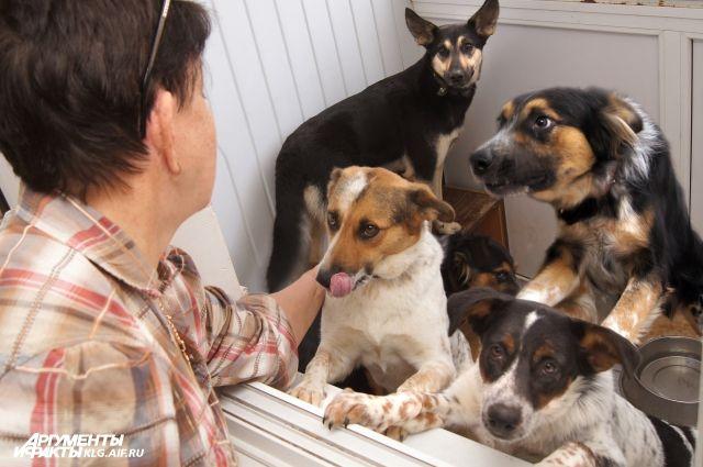 На корм собакам уходит почти вся зарплата Татьяны Владимировой.