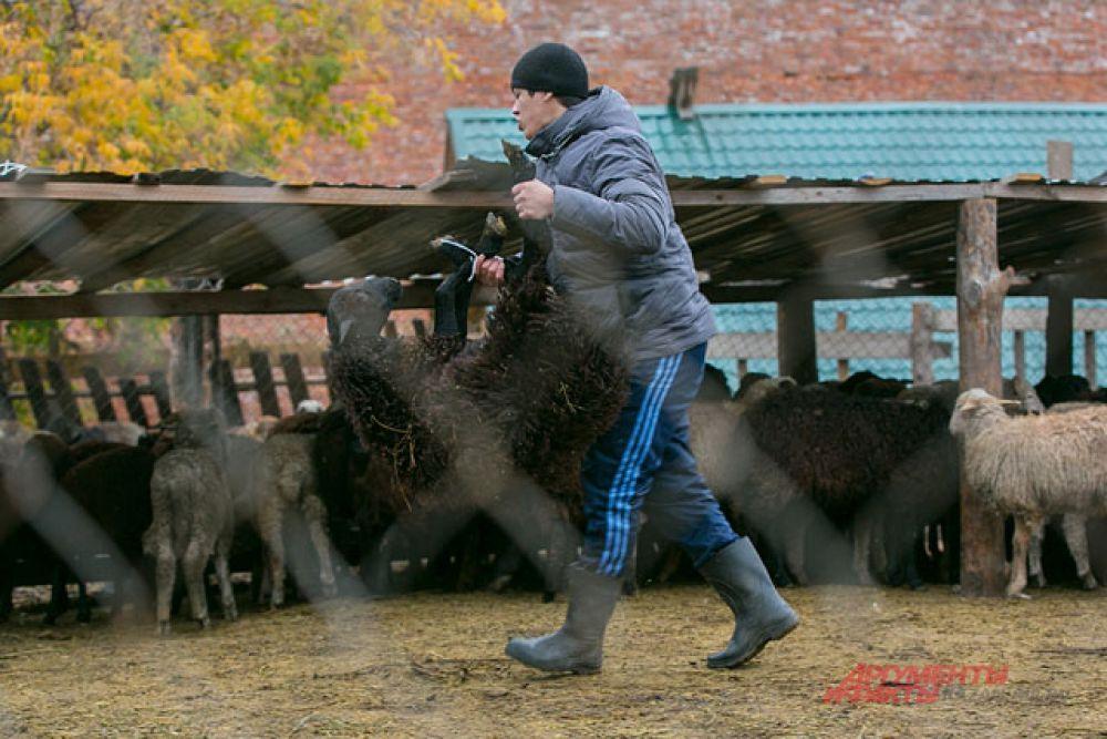 Накануне праздника возле мечетей и городских рынков организуют специальные загоны для скота.