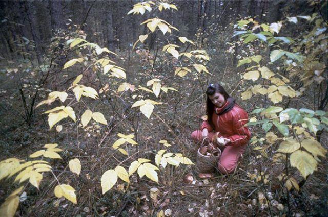 В заповедниках даже грибы находятся под охраной государства.